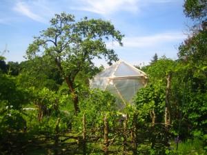 Der Apfelbaum spendet bei der heißen Nachmittagssonne Schatten